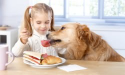 Little-girl-feeding-dog