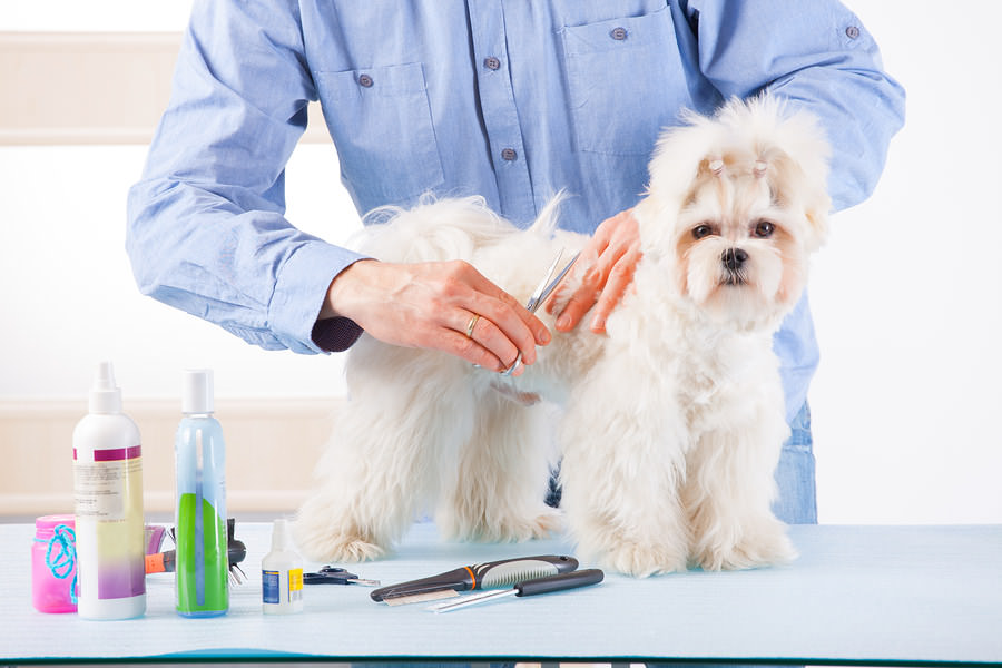 Smiling-man-grooming-a-dog
