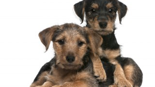 15 Reasons to Adopt a Mutt Instead of a Purebred Dog