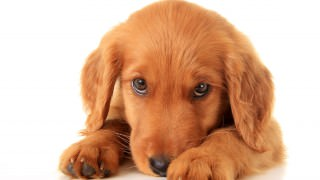 20 Most Popular Puppy Names