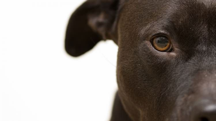 12 Most Hated Dog Breeds of All Time