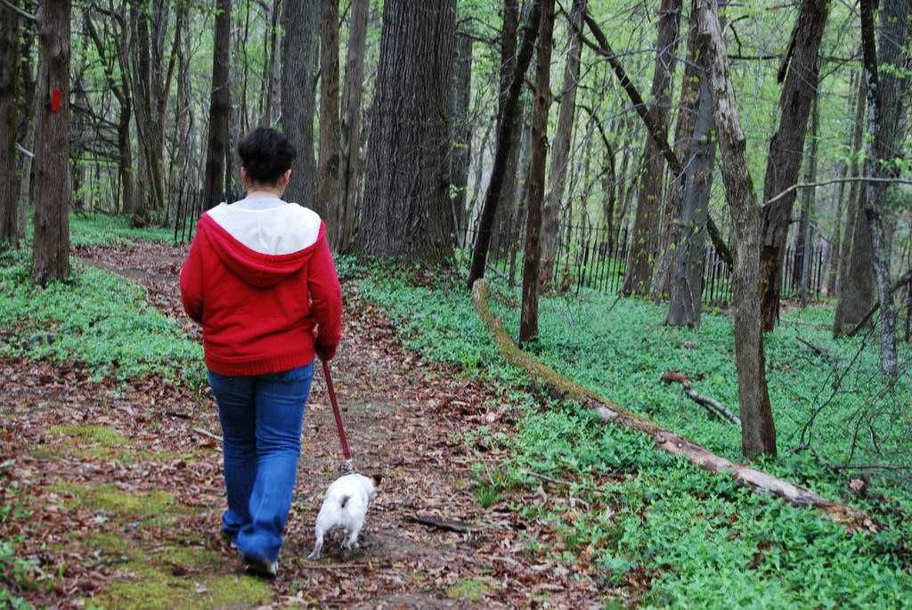 14. Always Walk Your Dog on a Leash When Away from Home