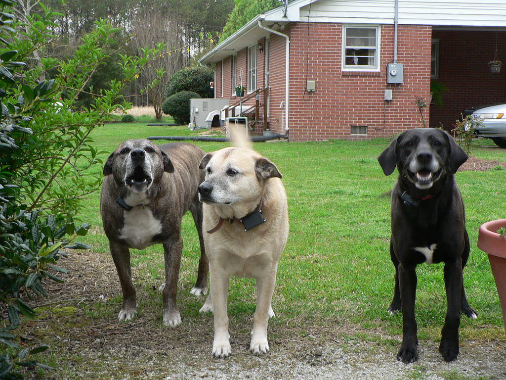 14-dogs-flickr-crowdive
