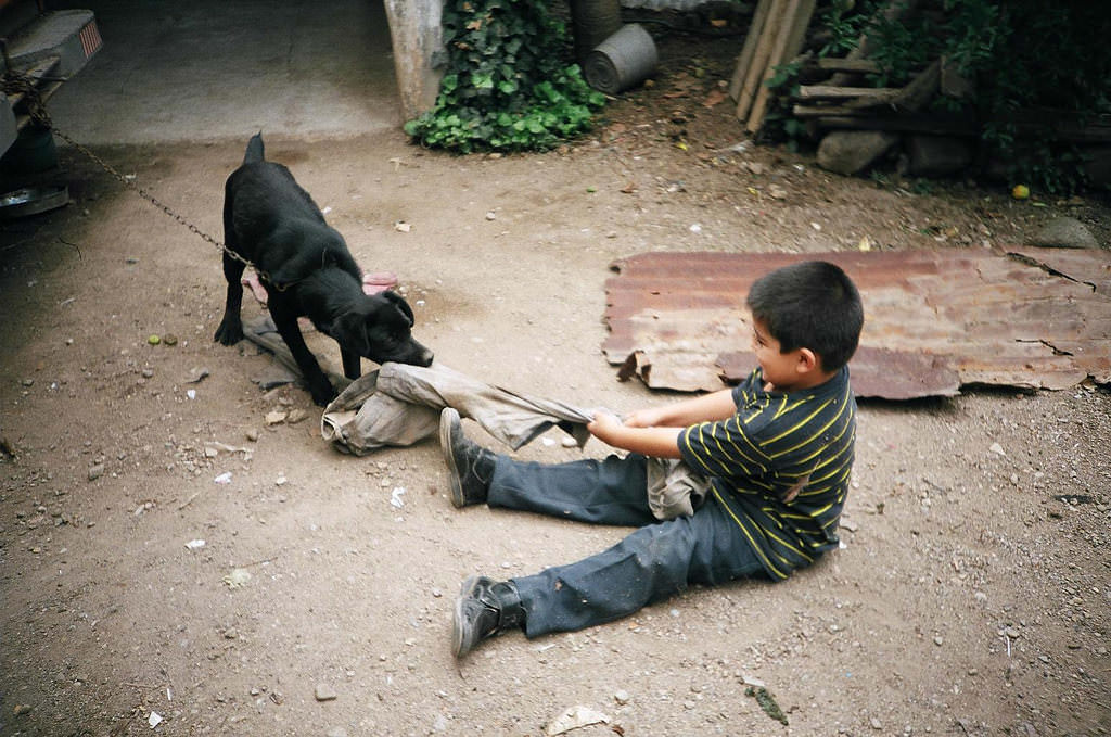 8. Never Allow a Child to Roughly Handle Your Dog