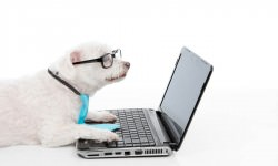 The Pros and Cons of Online Dog Training