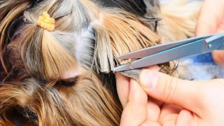 Finding the Right Groomer