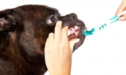 Teeth Cleaning On A Budget