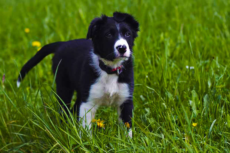 Best Dogs For Hot Climates