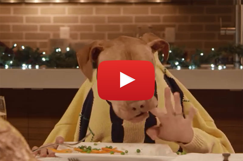 Dogs With Human Hands Attend The Best Christmas Dinner