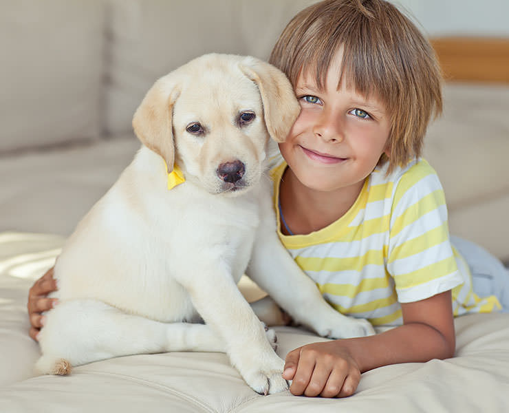 pets or children How do children react to pet loss and grief the death of a cherished pet creates a sense of loss for adults and produces a predictable chain of emotions.
