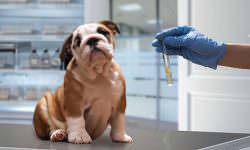 What Can A Dog DNA Test Tell You